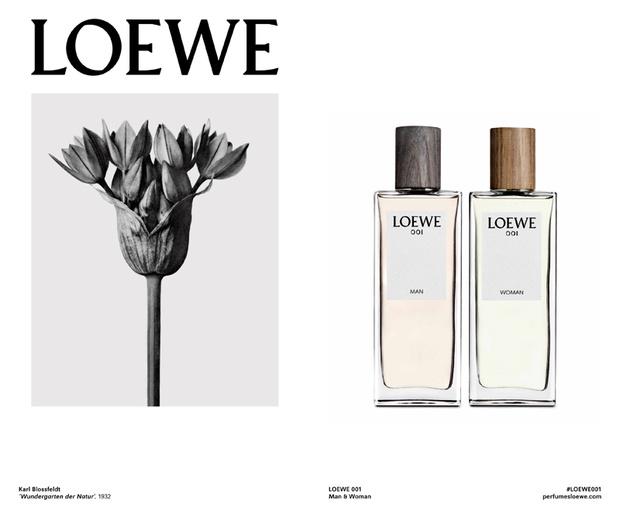 Loewe3